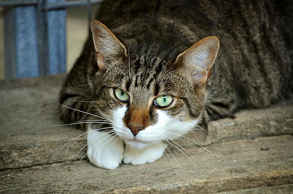 猫の好物は魚じゃない?実はインドではカレーを食べている。