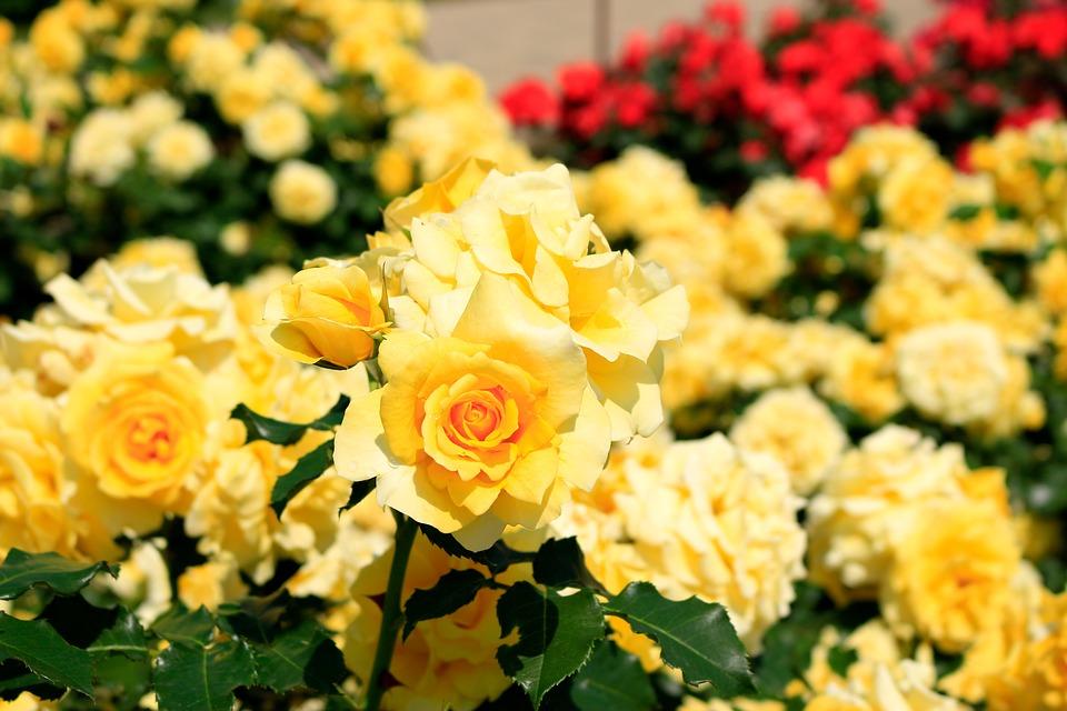 父の日の由来と、贈る花の意味、知ってました?