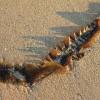 昆布が海の中でダシが出ないのなんでだろう!?