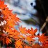 【10月】今日は何の日?朝礼やスピーチのネタになる雑学を紹介