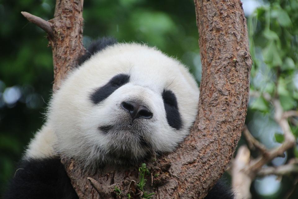 パンダの雑学まとめ一覧