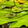 井の中の蛙大海を知らずの意味や由来とは?実は続きが存在します。