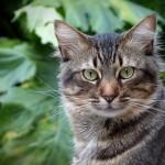 猫よけのペットボトルって本当に意味や効果があるの?