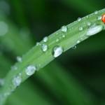 五月雨の意味や語源・由来とは?実は五月雨は六月によく降ります。