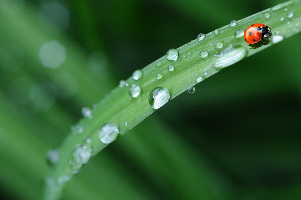 五月雨意味語源由来
