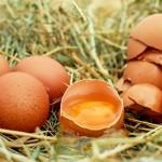生卵とゆで卵の見分け方を簡単に解説、回す以外にも色々な方法が!