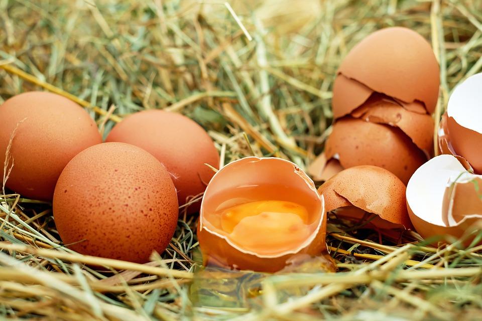 生卵ゆで卵どちらが日持ち