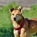 噛ませ犬とはどういう意味?語源や由来についてもわかりやすく解説。