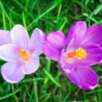 「お花を摘む」の意味や語源、由来や使い方を解説!実は登山用語?