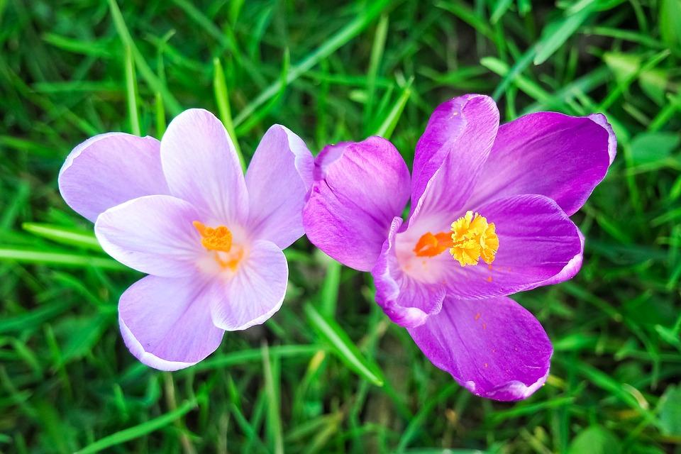 お花を摘む意味語源由来使い方