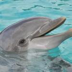 イルカは会話でお互いを名前で呼び合い、個別の声を持っている。