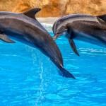 イルカの睡眠方法がとても器用、半分眠って半分起きる。