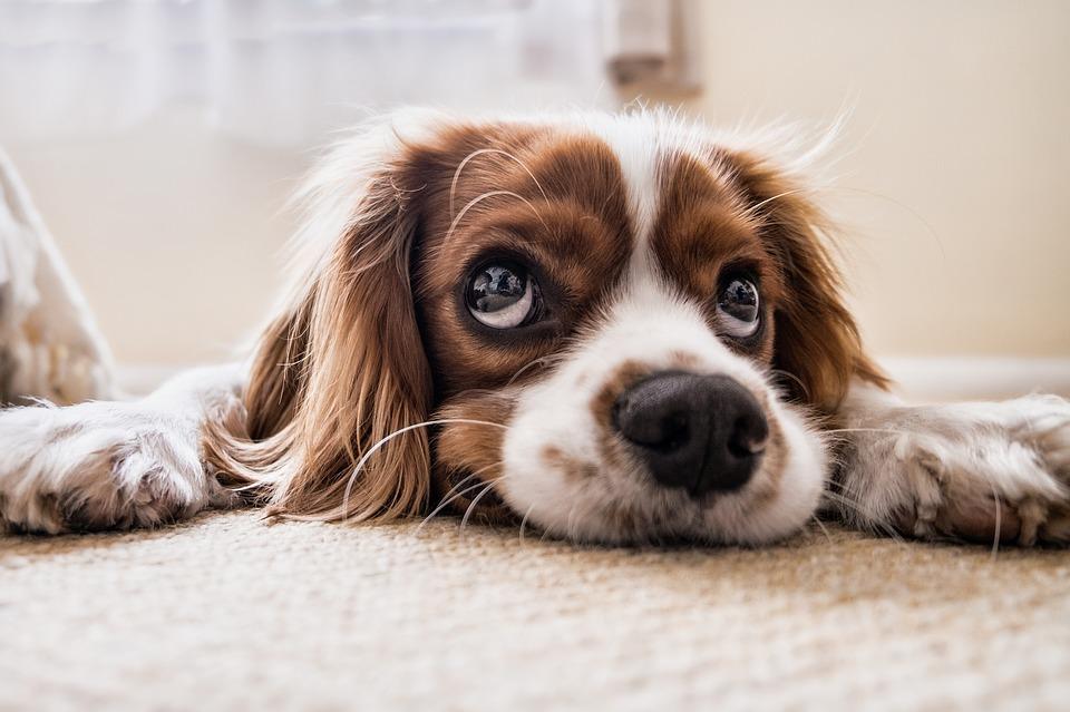 犬の雑学まとめ