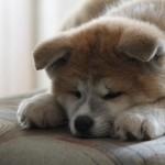 犬の雑学まとめ、犬好きの方に必見の豆知識を集めました!