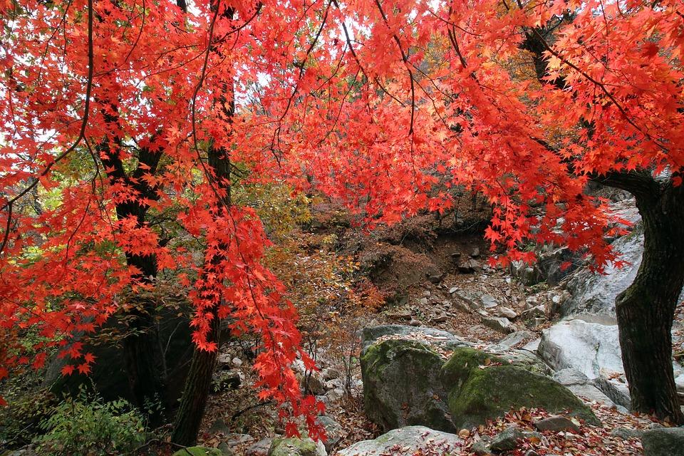 紅葉で葉が赤くなる理由