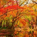 紅葉で葉が赤くなる理由、実は正確にはわかっていない!
