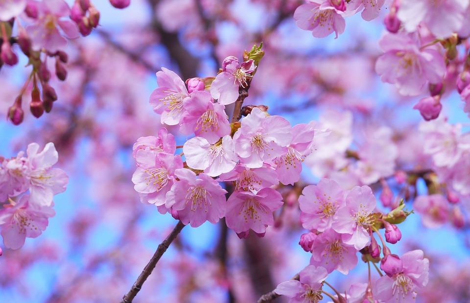 さくら味とは結局どんな味?本当に桜の味がするのか調査。