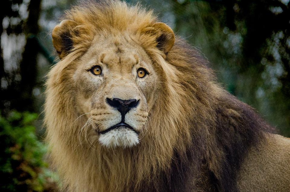 ライオン別名