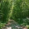 「森と林」「森林と樹海」の違い、意外と知られていない使い分け