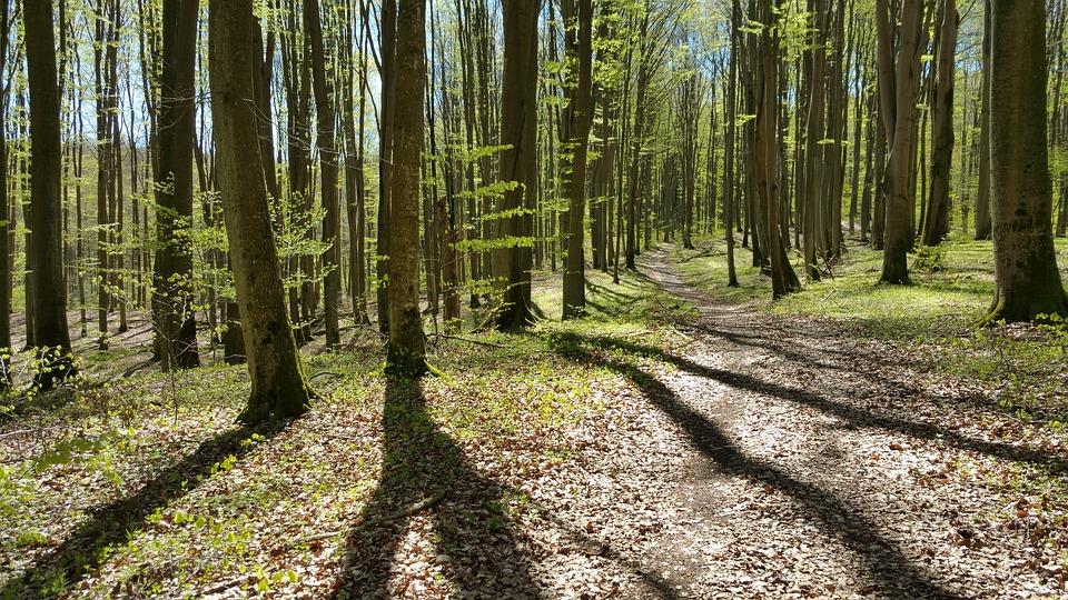 森と林違い