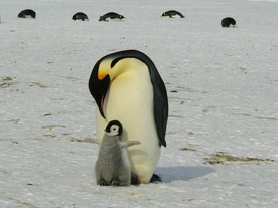 ペンギン足長い