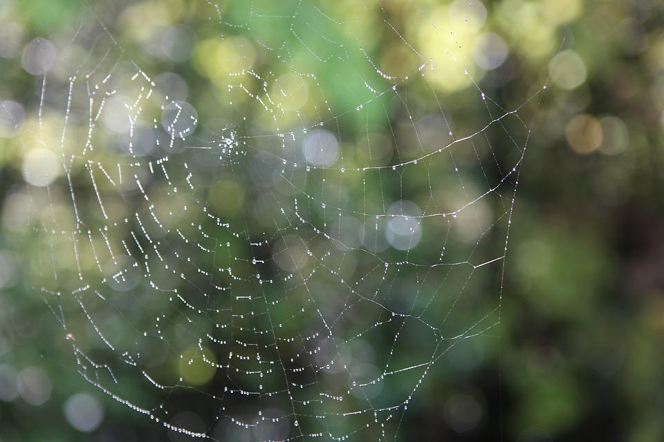 蜘蛛コーヒー