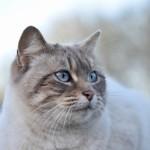 三味線に猫皮や犬皮が使われる理由、なぜ動物の皮を使用する?