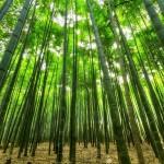 竹の花は120年に1度しか咲かないため、次に咲くのは2080年!